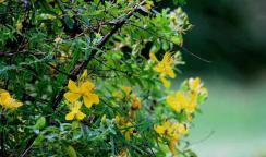Neue Behandlungsstrategie setzt auch auf pflanzliche Arzneimittel
