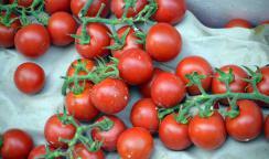Tomaten senken Risiko signifikant